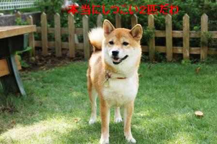 2009_08220074.jpg