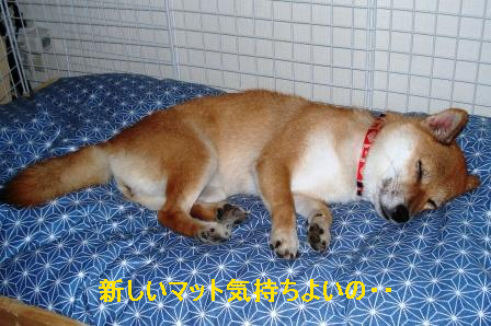 2009_08290006.jpg