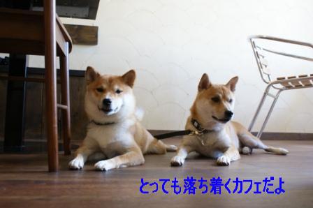 2009_09110052.jpg