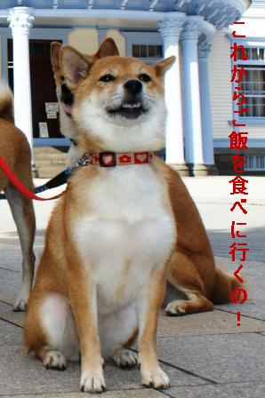 2009_09110084.jpg