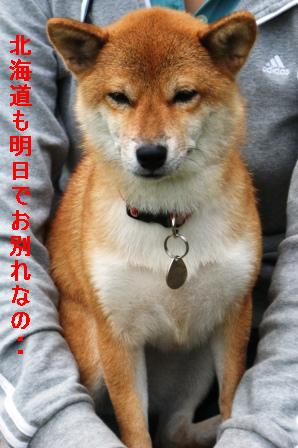 2009_09110198.jpg