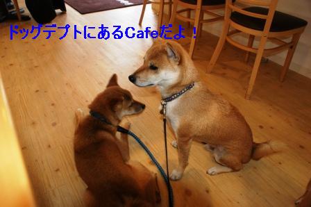 2009_09110225.jpg