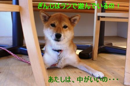 2009_09110229.jpg