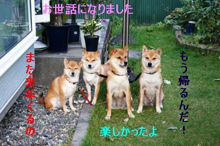 2009_09120100.jpg