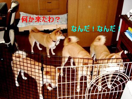2009_10030092.jpg