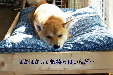 2009_10110020.jpg