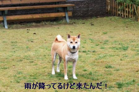 2009_10250038.jpg