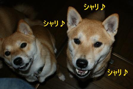 2009_11120011.jpg