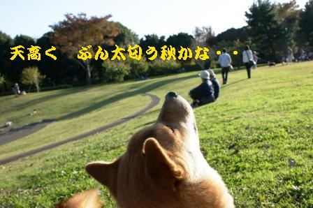2009_11150072_20091117083034.jpg
