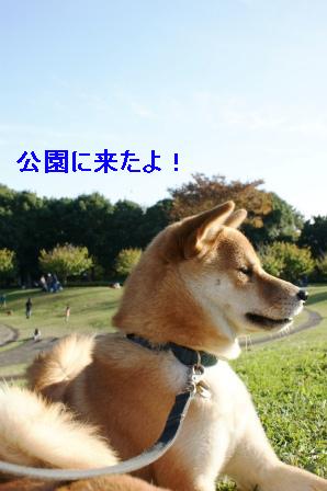 2009_11150074.jpg