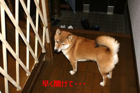 2009_11210005.jpg