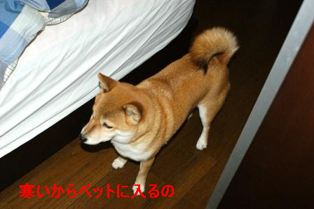 2009_11210007.jpg
