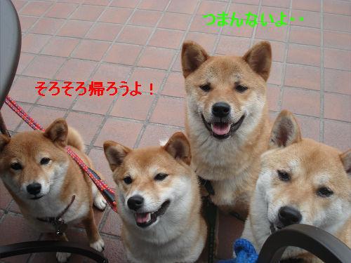 7_20090531161855.jpg
