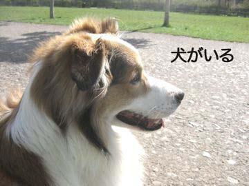 2009032010.jpg