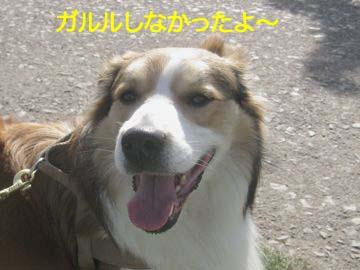 2009032011.jpg