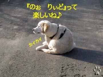 2009032509.jpg