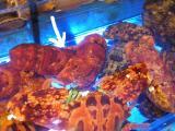 この蝦が大好きなのだ