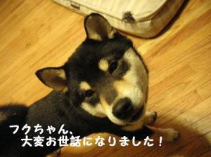 平三、里親さん決定(8)