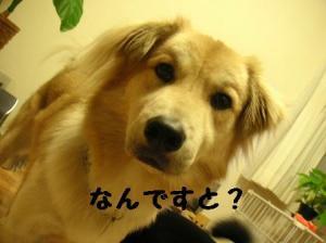 平三、里親さん決定(7)