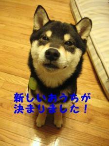 平三、里親さん決定 (1)
