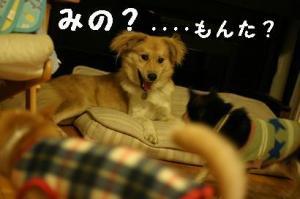 IMG_3196.jpg