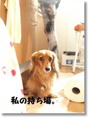 pe20110204れんと 330-009