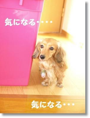 pe20110204れんと 140 ぺ-004