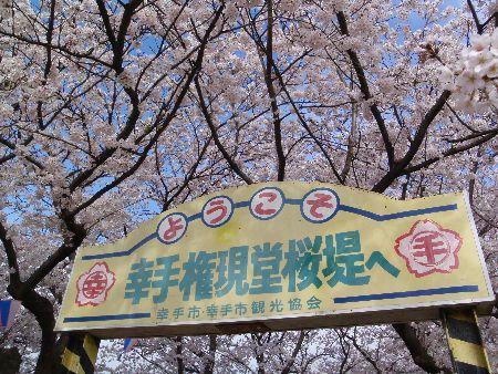 権現堂桜堤