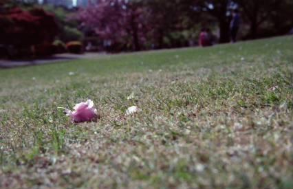 花が零れる