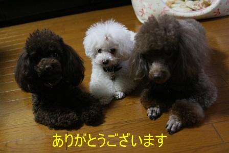 IMG_6654h.jpg