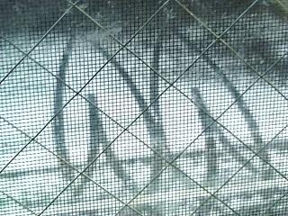 雪のハート