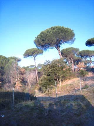 仏3日目キノコの木