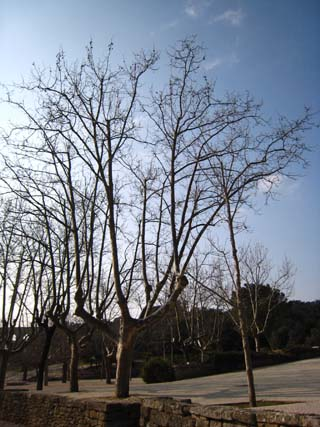 ポンデュガール木