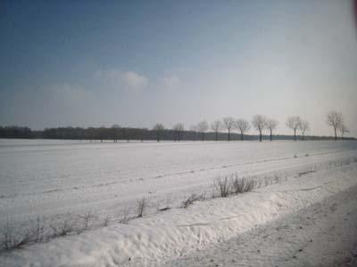 仏4日目雪景色3