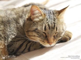猫2 ブログ1