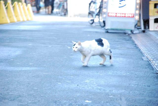 文京区の猫