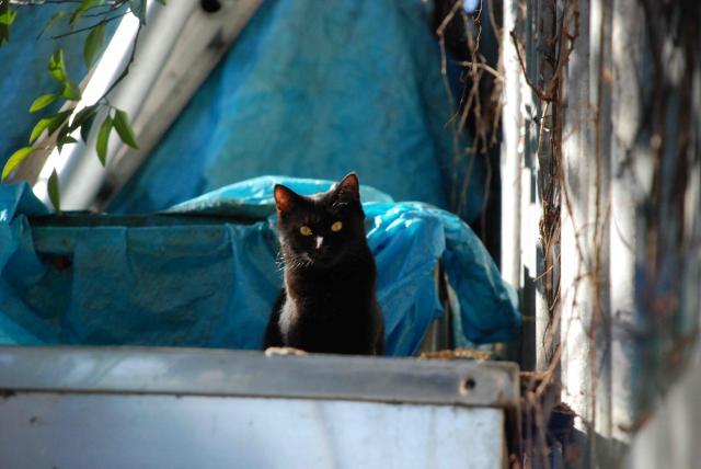 西武新宿線沿線の猫