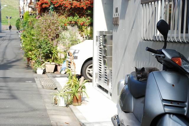板橋区の猫