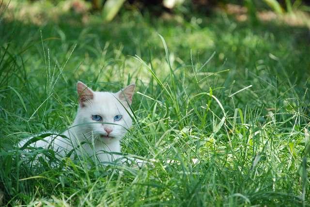 静岡県の猫