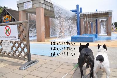 犬遊泳禁止