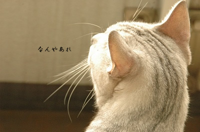 DSC_4553.jpg