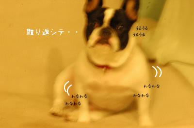 DSC_4585.jpg