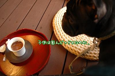 DSC_6079.jpg