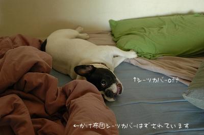 DSC_6768.jpg