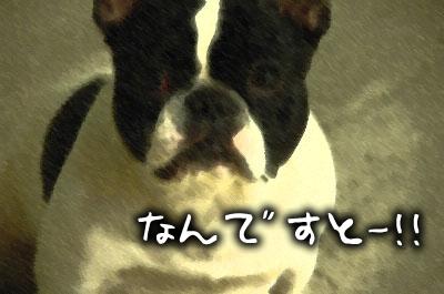 DSC_9060.jpg