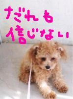 dc120904 コピー1(修整1)