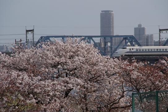 桜と新幹線2