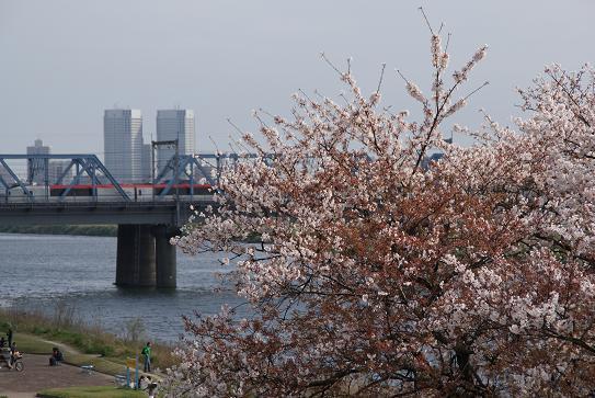 桜とNEX