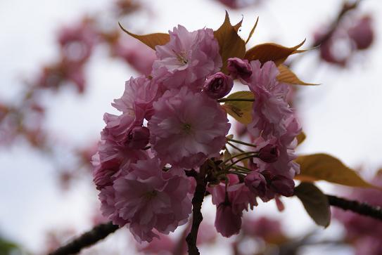 春よ来い2