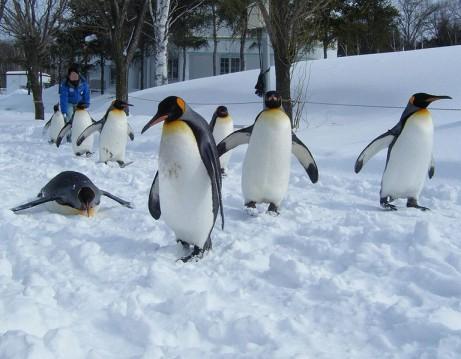 ペンギン縮小